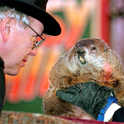 Punxsutawney Phil emerges from his burrow on Gobbler's Knob /AP